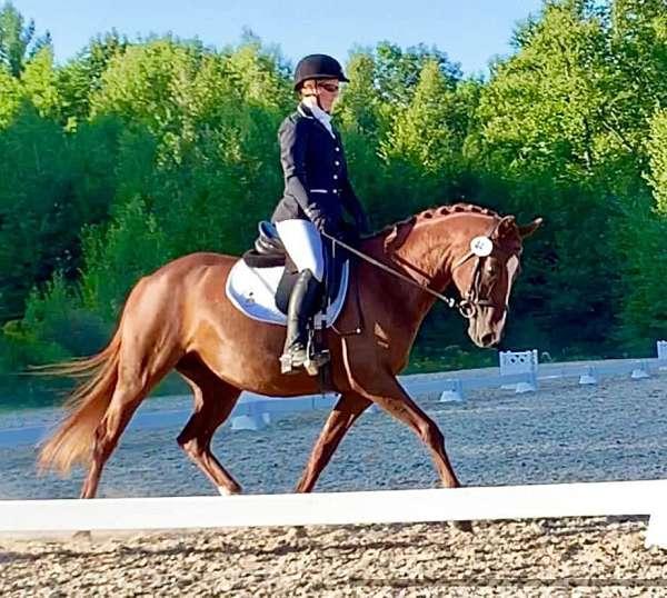 confident-rider-arabian-horse