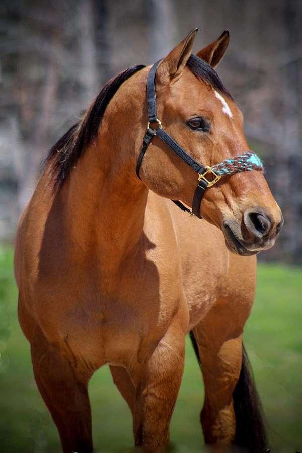 finished-quarter-horse