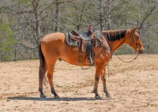 lesson-quarter-horse