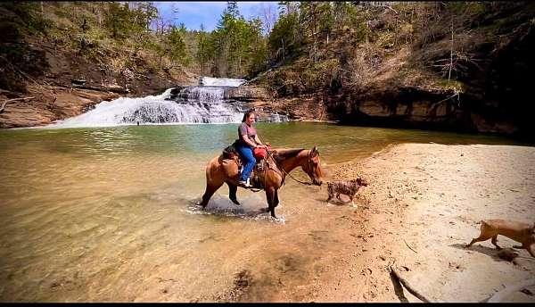 team-roping-quarter-horse