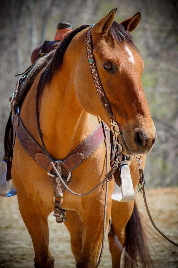 all-around-quarter-horse