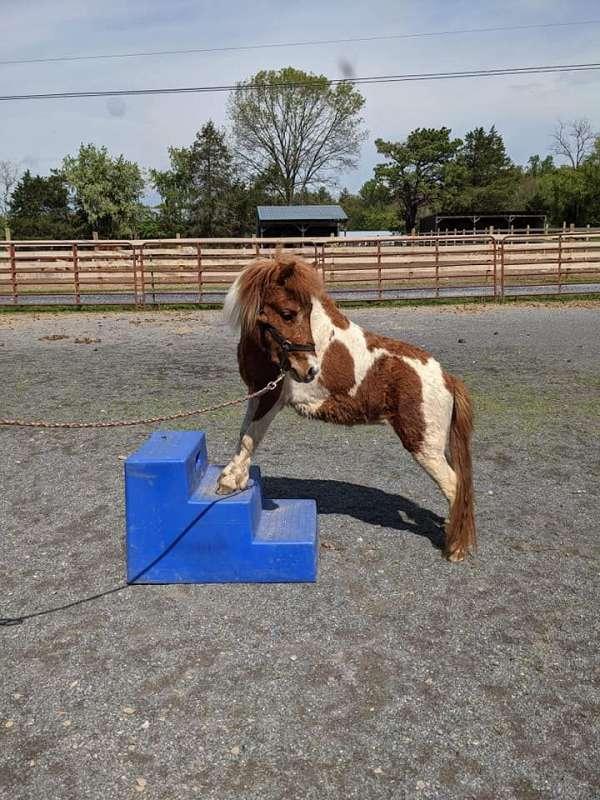 smart-paint-pony
