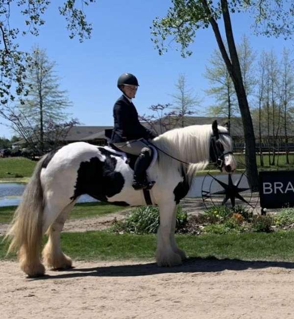 all-around-gypsy-vanner-horse