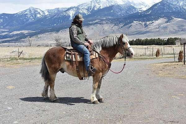 belgian-haflinger-belgian-horse