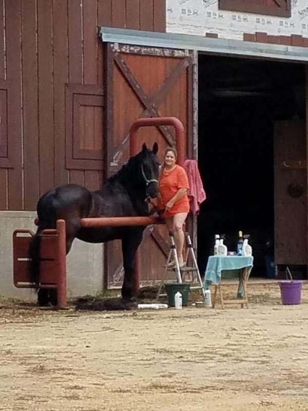 impresive-friesian-horse