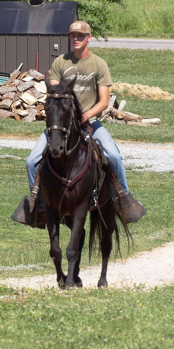 none-horse
