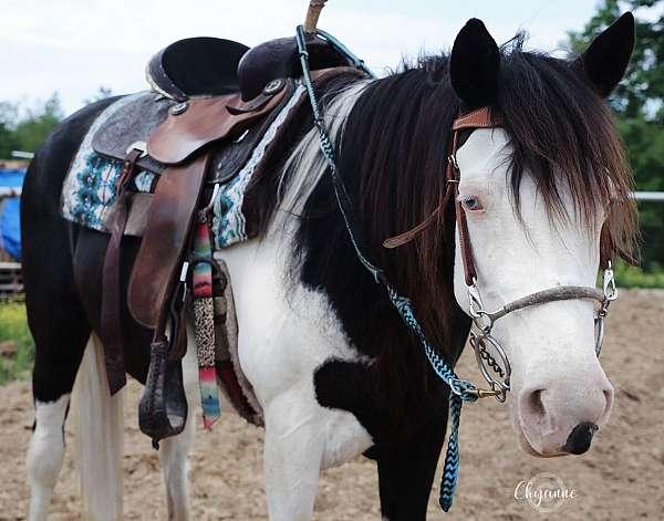 homozygous-trail-pinto-horse