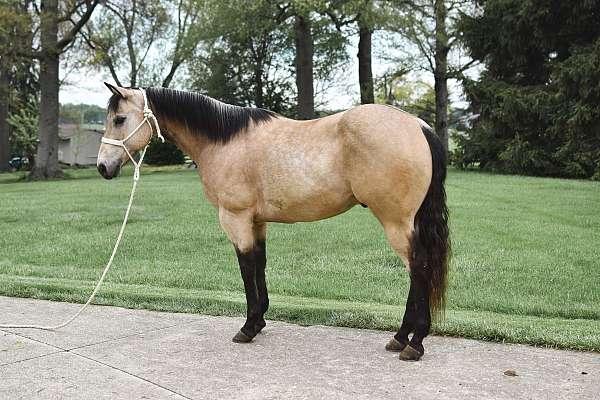 buckskin-ridden-we-horse