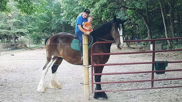 athletic-beginner-clydesdale-horse