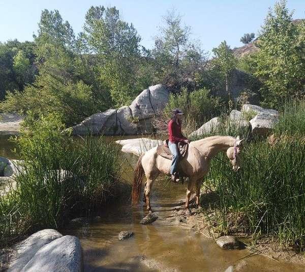 babysitter-kentucky-mountain-horse