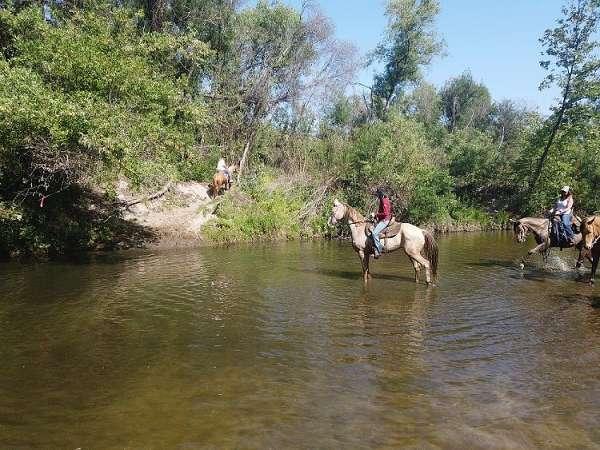 amber-champagne-kentucky-mountain-horse