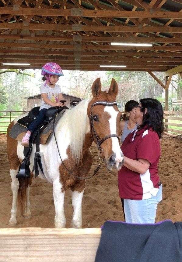 pleasure-driving-national-show-horse