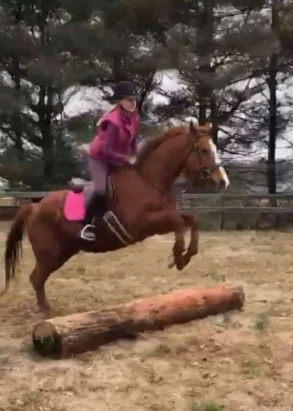 thoroughbred-horse