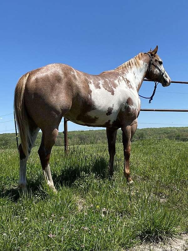 paint-mare