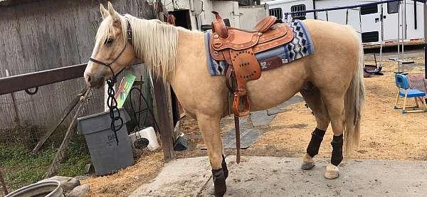 quarter-horse-gelding
