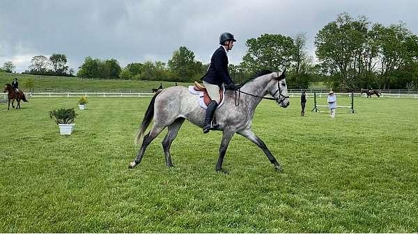 dressage-thoroughbred-horse
