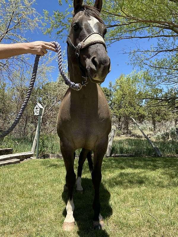 arena-quarter-horse