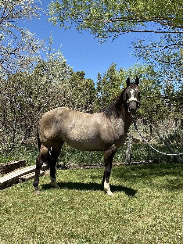 nice-quarter-horse