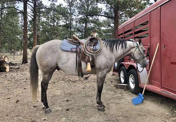 calf-roping-quarter-horse
