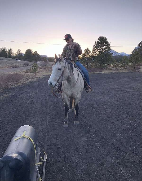 gymkhana-quarter-horse