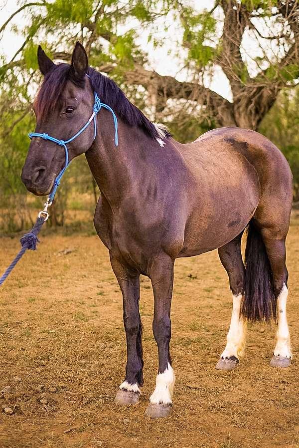 all-around-friesian-horse