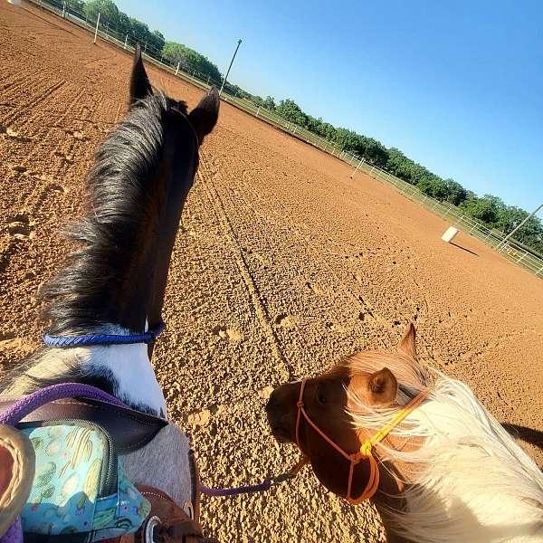 english-pleasure-friesian-horse