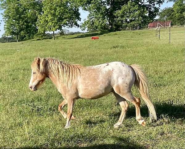 pet-pony