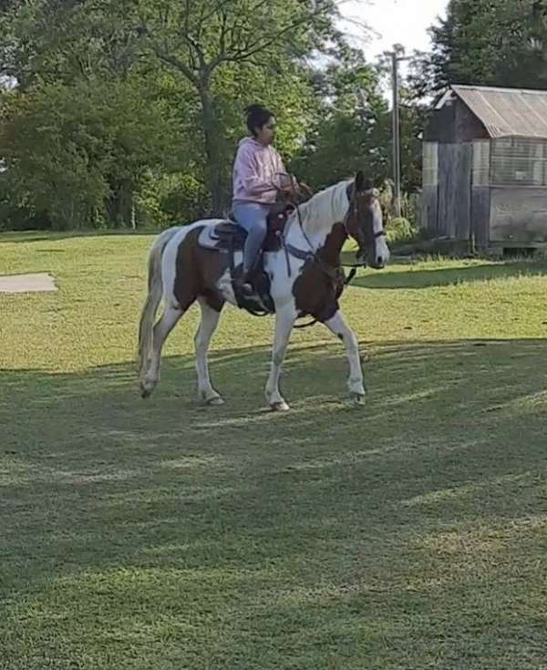brown-white-paint-horse
