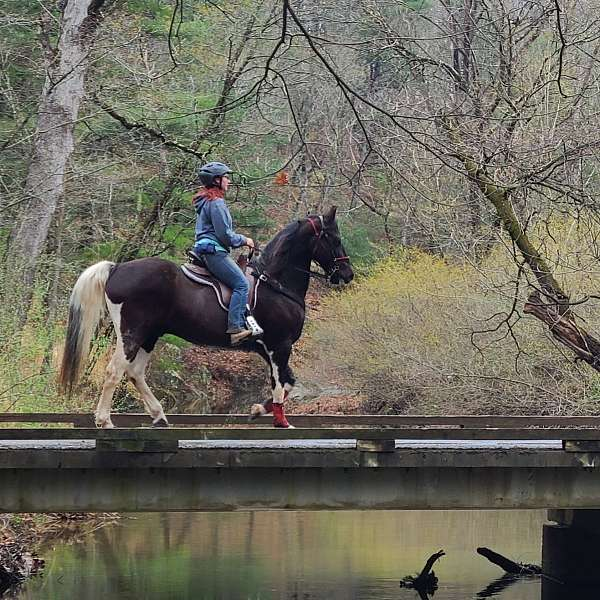 willing-tennessee-walking-horse