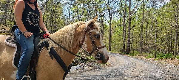 tan-spotted-saddle-horse