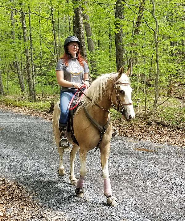 racking-horse-mare