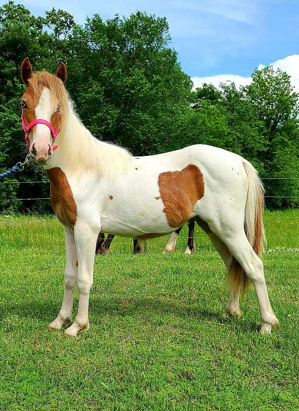 miniature-pony-filly-yearling