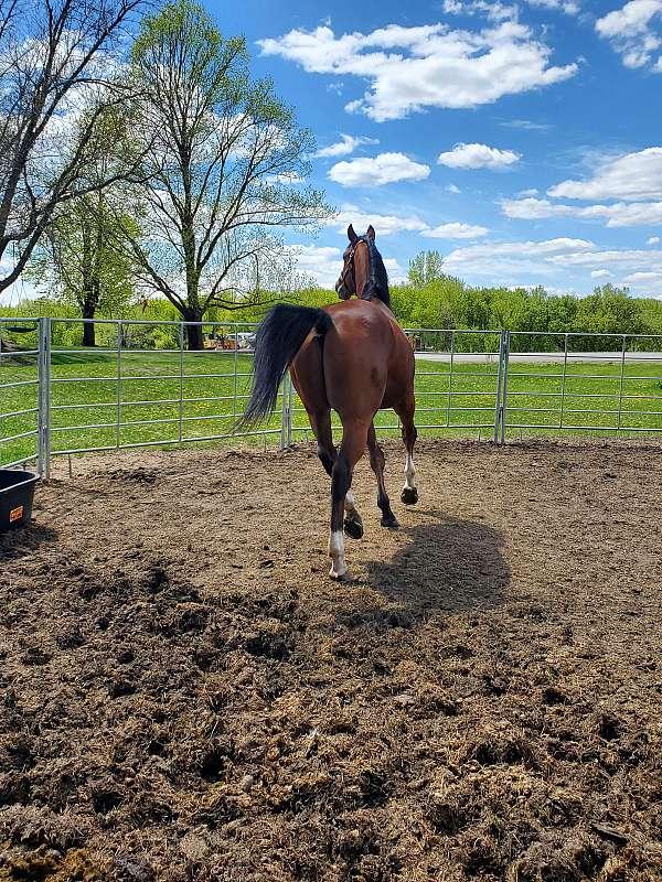 athletic-thoroughbred-horse