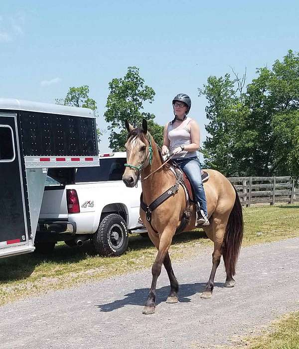 gaited-horse-for-sale-in-va-tennessee-walking