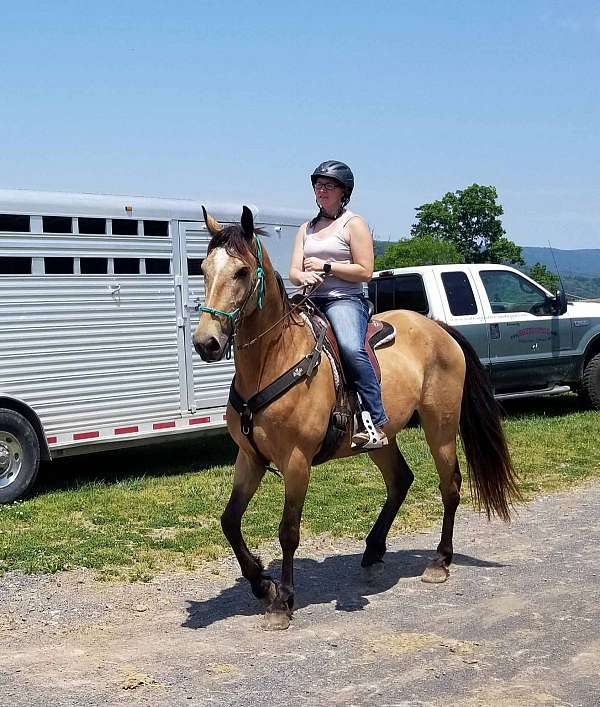 trail-horse-for-sale-in-va-tennessee-walking