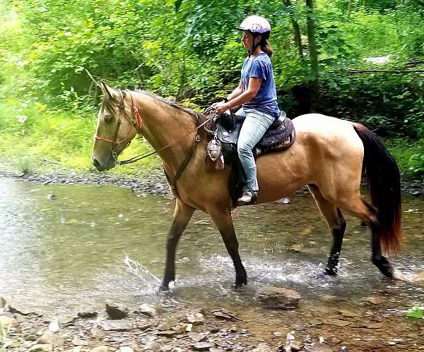 finished-tennessee-walking-horse