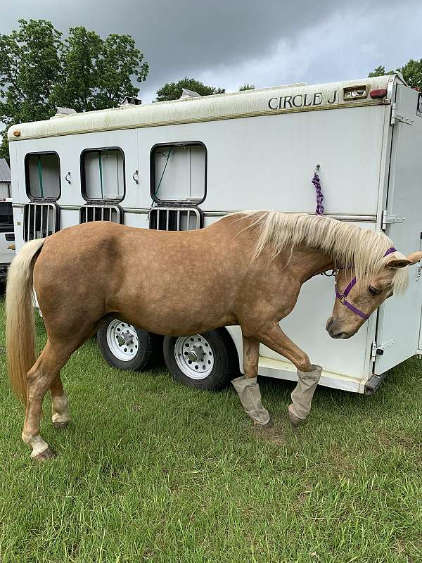 tennessee-walking-horse