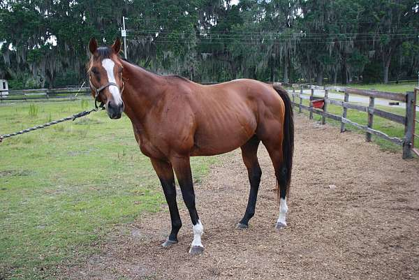 racehorse-thoroughbred-horse
