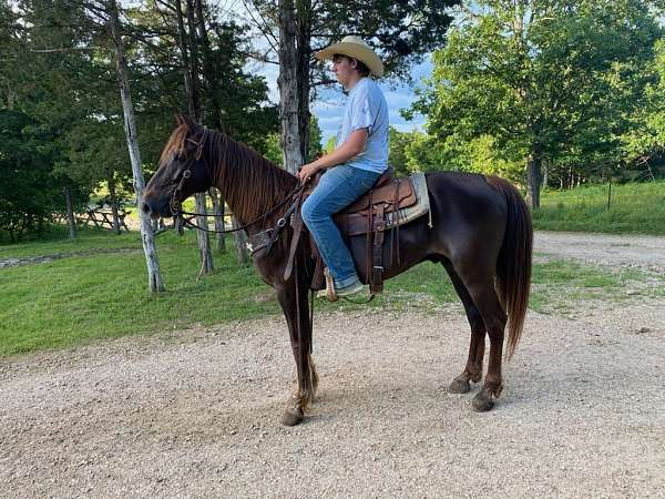 liver-chestnut-rocky-mountain-for-sale