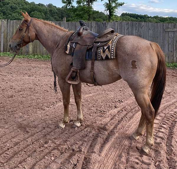 red-roan-brand-horse
