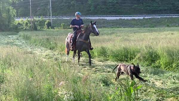 gets-along-with-others-kentucky-mountain-horse