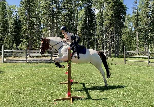 trail-riding-thoroughbred-horse