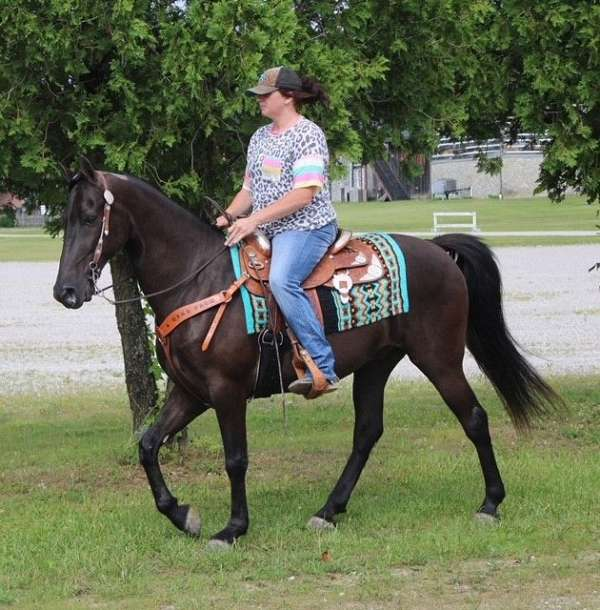 kid-safe-tennessee-walking-horse