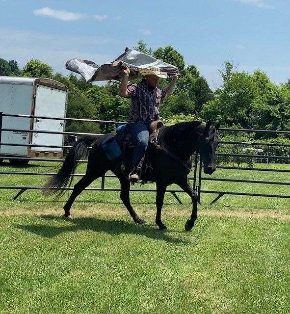 experienced-tennessee-walking-horse