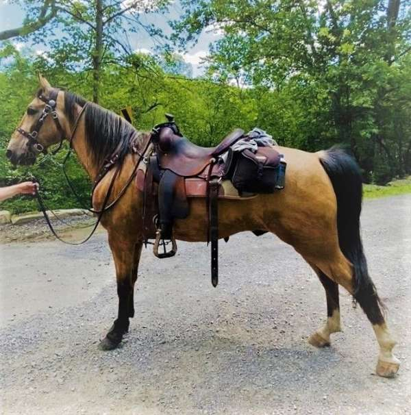 family-tennessee-walking-horse