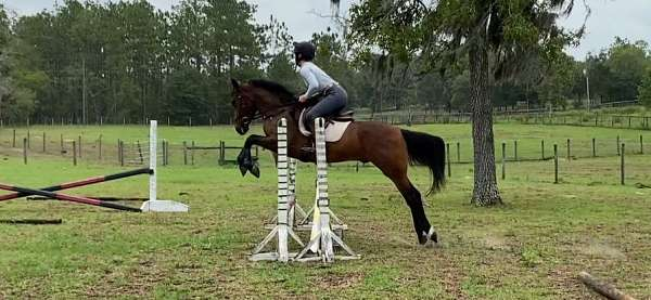 bay-hind-white-pastern-horse