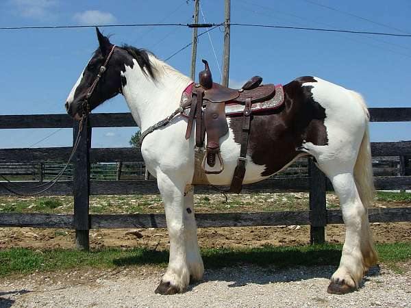 trail-class-competitio-draft-horse