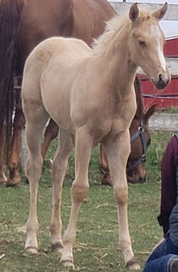 great-personality-filly