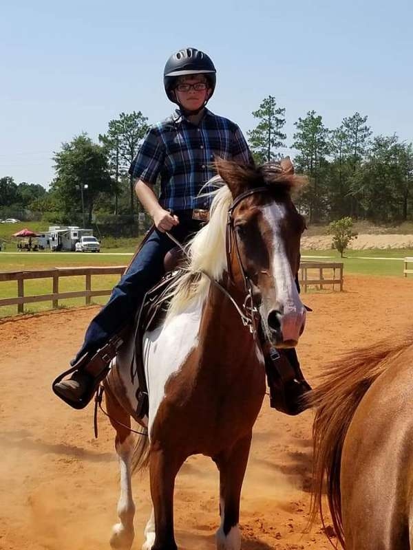 all-around-spotted-saddle-horse