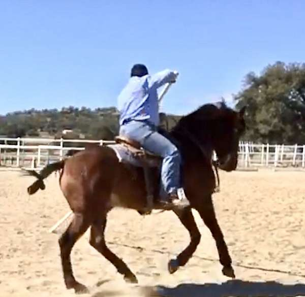 worked-with-andalusian-horse